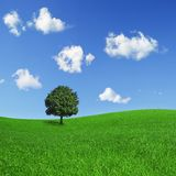 Lonely tree on a green field Royalty Free Stock Photo