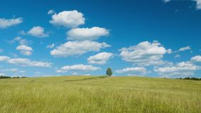 Lonely tree on green field against blue sky background. Shot of lonely tree on green field against blue sky background stock video