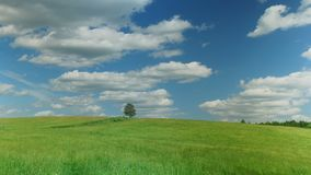 Lonely tree on green field against blue sky background. Time lapse shot of lonely tree on green field against blue sky background stock video footage