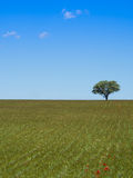 Lonely tree green on field Stock Photos