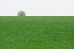 Lonely tree on green field Stock Images