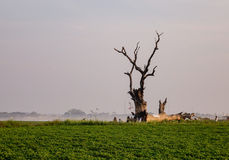 Lonely tree on the green field Royalty Free Stock Photos