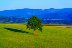 Lonely tree on the green field in mountain valley. Hills and mountains around Royalty Free Stock Photos