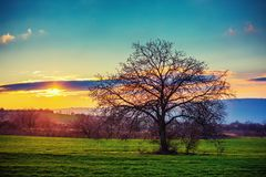 Lonely tree on a green field in the sunset winter time.  Royalty Free Stock Photos