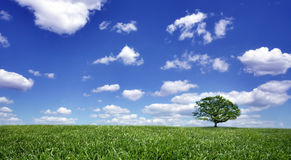 Lonely tree on green filed Stock Photo
