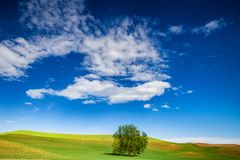 Lonely tree on green filed Royalty Free Stock Photography