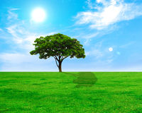 Lonely tree on green grass field Royalty Free Stock Images