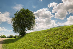 Lonely tree on a green hill Royalty Free Stock Image
