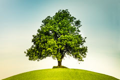 Lonely tree on a green hill Stock Image