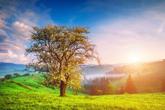 Lonely tree on a green hill Stock Images