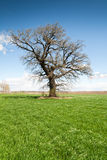 Lonely tree on green meadow Stock Photo