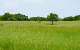 Lonely tree on green meadow Royalty Free Stock Photos