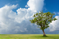 Lonely tree on ground in cloudy sky Royalty Free Stock Photos
