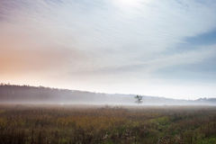 Lonely tree on the ground with morning mist Royalty Free Stock Photos