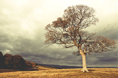 Lonely tree growing in the Lyme Park, England. Lonely tree growing in the Lyme Park, England stock images