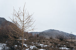 Lonely tree growing. Lonely tree growing on top of the rock Royalty Free Stock Photos