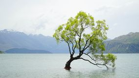 Lonely tree growing from the Wanaka lake, New Zealand stock photo