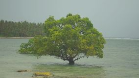 Lonely tree growing in the water near the shore. Silhouetted against the grey sky. The wind blows and rustles the leaves of the tree, and beneath it, splashing stock video