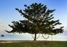 Lonely tree with hammocks. Lonely tree on beach ocean with hammocks royalty free stock photos