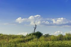 Lonely tree with a hawk on it royalty free stock photo