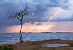 Lonely tree and heavy clouds. The cloudy sky and storm clouds, lonely tree costs on a wind Stock Photography