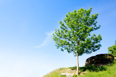 Lonely tree on a hill Royalty Free Stock Photography