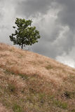 Lonely Tree on the Hill Royalty Free Stock Image