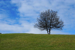Lonely tree on the hill. With a clear blue sky Stock Image