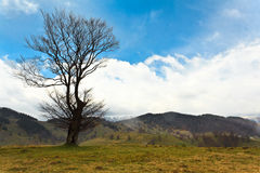 Lonely tree on a hill. Landscape with lonely tree on a hill and blue sky with clouds Stock Image