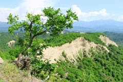 Lonely Tree on a Hill. Lonely tree growing on a hill. Landscape with mountains and sand hills on the background Stock Photos