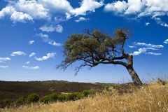 Lonely tree on a hill Stock Photography