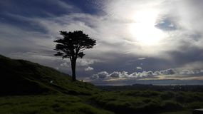 Lonely tree. On a hill Royalty Free Stock Image
