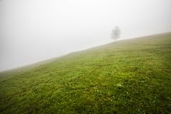 Lonely tree on the hill, above the misty valley in Bohemian Switzerland Stock Photo