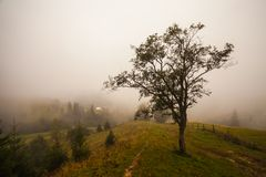 Lonely tree on the hill, above the misty valley in Bohemian Switzerland Royalty Free Stock Images