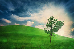 Lonely tree on hill. Cloudy weather. Conception contemplation of nature Stock Image