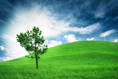 Lonely tree on hill. Cloudy weather. Conception contemplation of nature Royalty Free Stock Photos