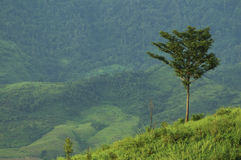 Lonely tree on hill Royalty Free Stock Image