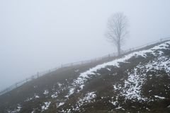 Spring landscape with a lonely tree. A lonely tree on a hill in the fog. A sad spring landscape with a dull morning royalty free stock photos