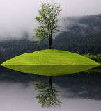 Lonely tree. Stock Photography