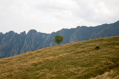 A lonely tree in the hill. A lonely tree in the middle of the hill Stock Images