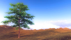 Lonely tree on the hill at morning time Stock Photography