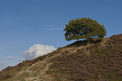 Lonely Tree on a Hill Royalty Free Stock Image