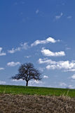 Lonely tree on hill Stock Images
