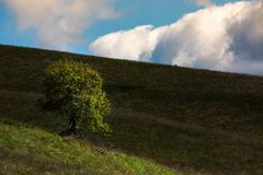 Lonely tree on hill side on a cloudy autumn day. Lovely natural background Royalty Free Stock Photo