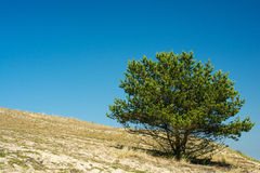Lonely tree on the hill in summer day Stock Photo