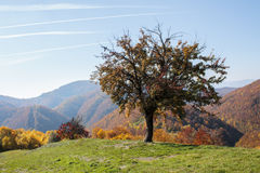 Lonely tree on a hill. In Transylvania Royalty Free Stock Photo