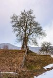 Lonely tree on the hill on winter day. Lovely rural scenery on an overcast day Stock Photos