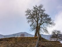 Lonely tree on the hill on winter day. Lovely rural scenery on an overcast day Stock Photography