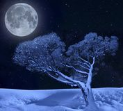 Lonely tree on a winter in moonlight of starry night sky. Lonely tree hoarfrost covered in moonlight and twinkle of winter starry night - fairy tale of winter Royalty Free Stock Images