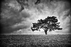 Lonely tree on horizon Royalty Free Stock Image